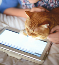 Cat looking at a tablet