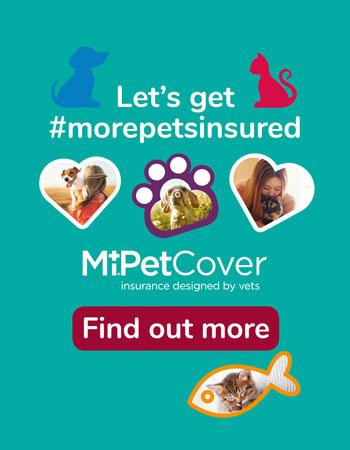 Let's get more pets insured banner